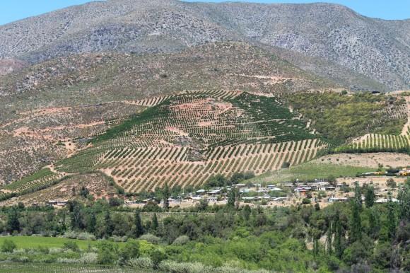 Weinberge in der Umgebung von Punitaqui