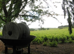 Das Fairtrade-zertifizierte Weingut Koopmanskloof