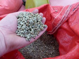 Fairtrade-Rohkaffee