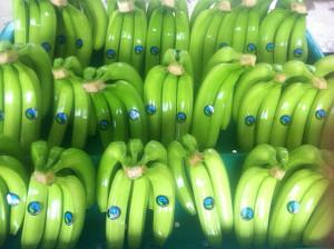 Fairtrade Bananen aus Peru