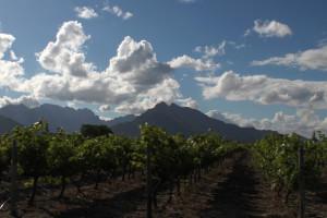 Weinanbau nahe Rawsonville, Westkap.