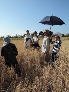Erschwerte Bedingungen beim Filmdreh: Schon gegen 9 Uhr brennt die Sonne auf das goldgelbe Feld.