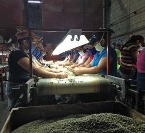 Die gute Qualität des Rohkaffees von Comsa überzeugt nach wie vor