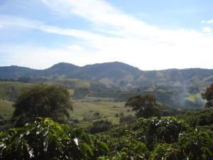 Kaffee wird in Brasilien meist ohne Schattenbäume angebaut.