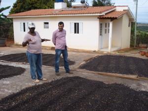Der Kaffee wird nach der Ernte auf dem Patio nach Lots (Feldern) getrennt zum Trocknen ausgelegt.