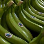 Bananen aus der Dominikanischen Republik