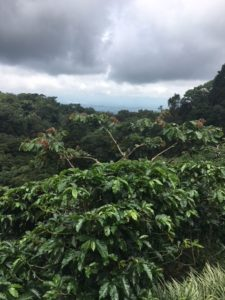 Kaffee-Farm
