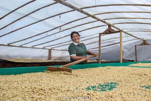 Gabriela Rojas Ñahuimallma, Kauffeebäuerin von der Fairtrade-Kooperative La Florida in Peru