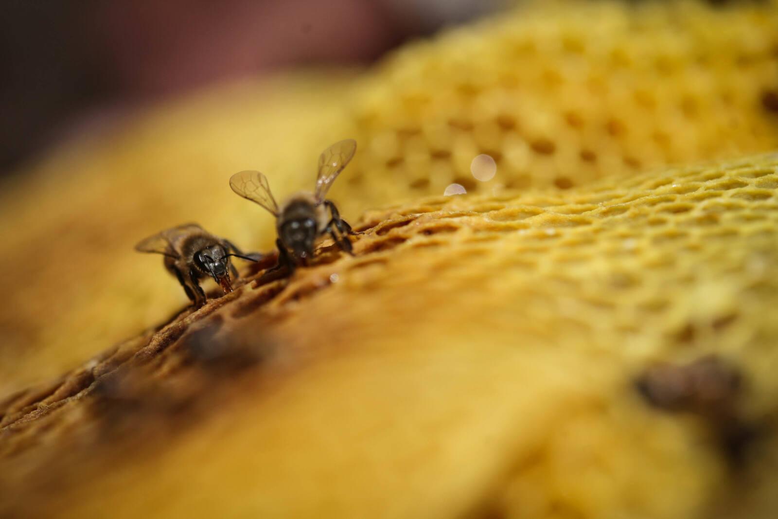 #Storybox: Warum Honig mehr ist als ein Brotaufstrich