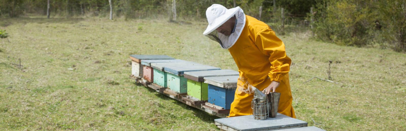 Fairtrade-Imker Guido von der Fairtrade-Kooperative Apicoop in Chile überprüft seine Bienenstöcke