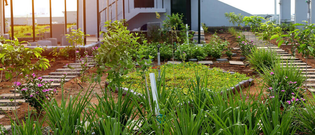 Auf dem Dach der Fabrik von SAGS Apparel befindet sich ein Kräutergarten.(c) Siva Pavi
