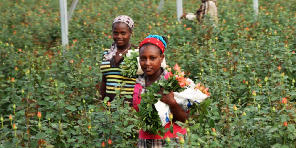 Auf Blumentour in Ostafrika