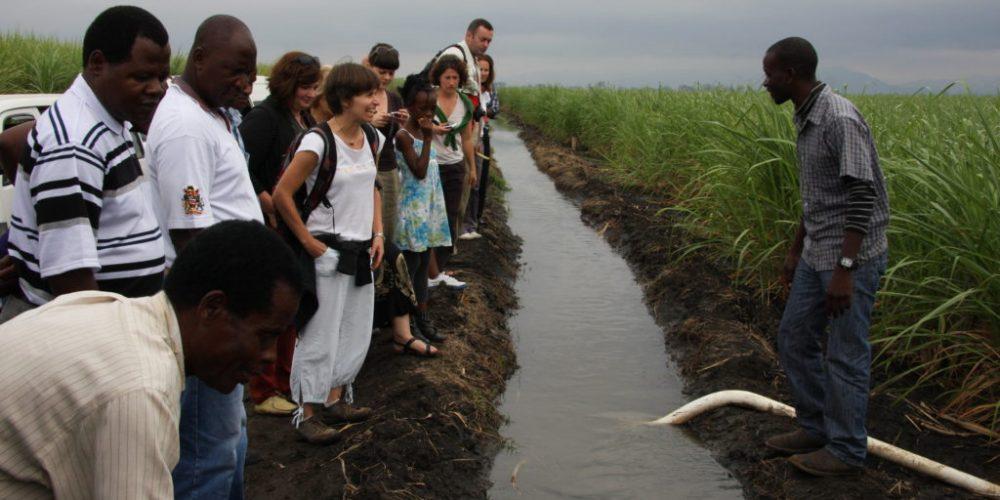 Die Zuckerrohr-Kooperative Kasinthula