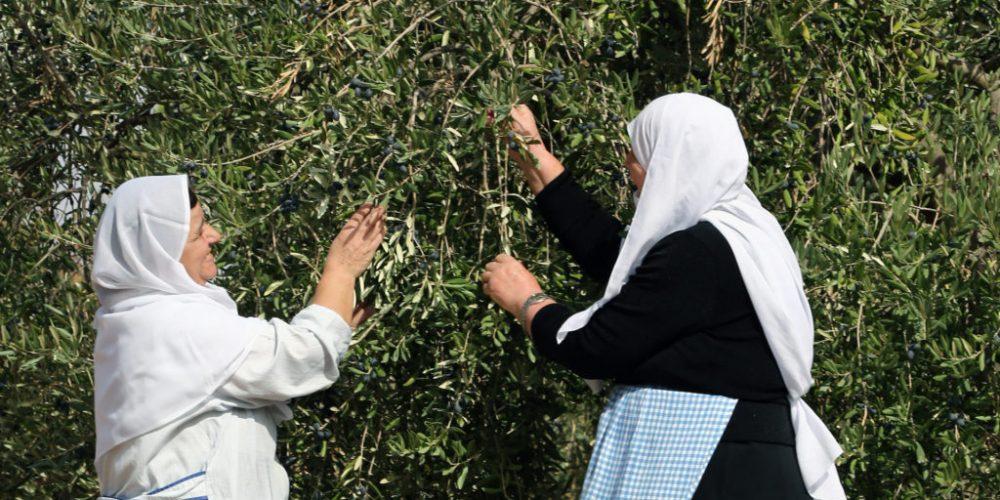 Fairtrade-Produzenten im Libanon – nach der Fairtrade-Kochshow in den Nahen Osten