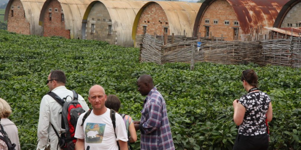 Die Lujeri Tea Estate in Malawi