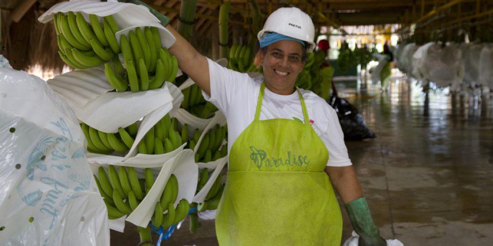 #Storybox: Nercy – Fairtrade-Bananen aus der Dominikanischen Republik