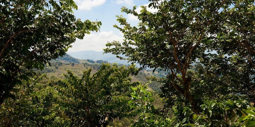Zu Besuch bei der ältesten Kooperative in Costa Rica