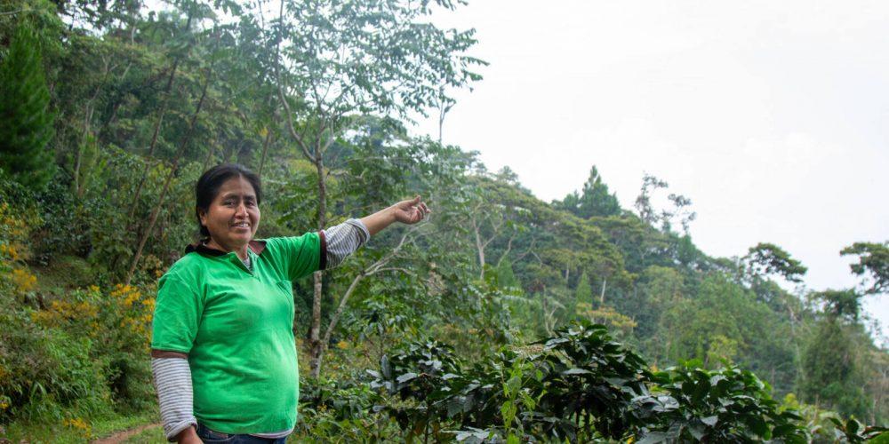 #Storybox: Elena, Gabriela und Rosaura – Selbstständig durch Kaffeeanbau