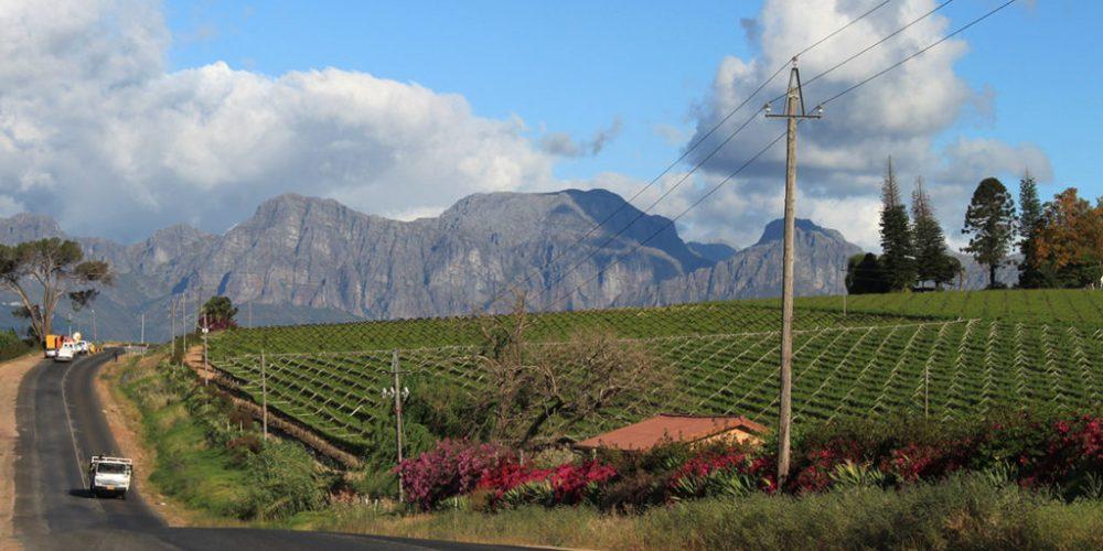 Im Land des Fairtrade-Weins