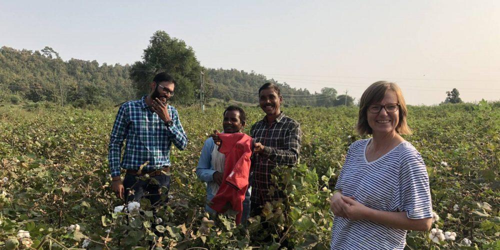 Baumwollernte in Indien. Erste Station: Indore
