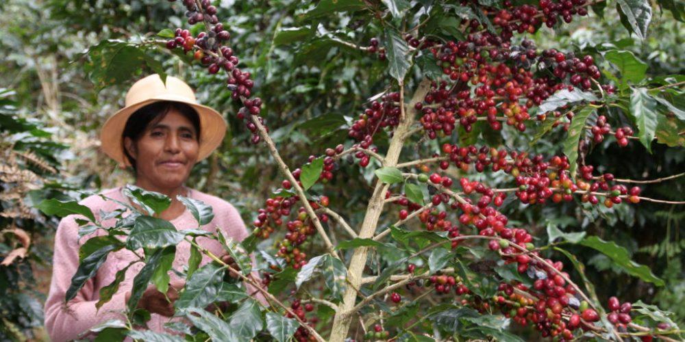 Im Land des Kaffees