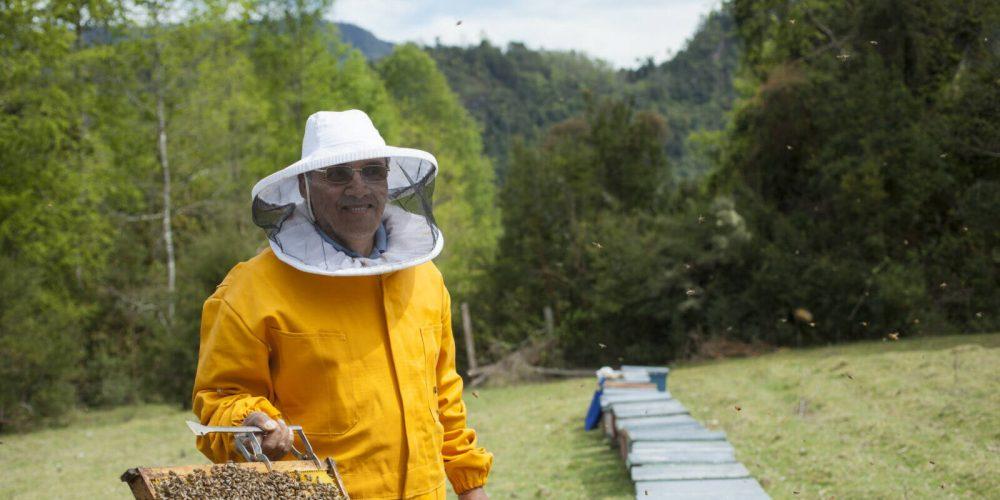 #Storybox: Fairtrade-Honig von Guido aus Chile